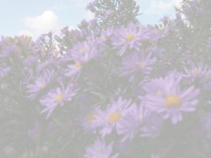 more-purple-flowers-layer.jpg