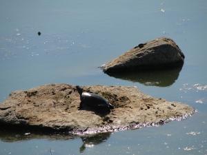 CB turtles 4
